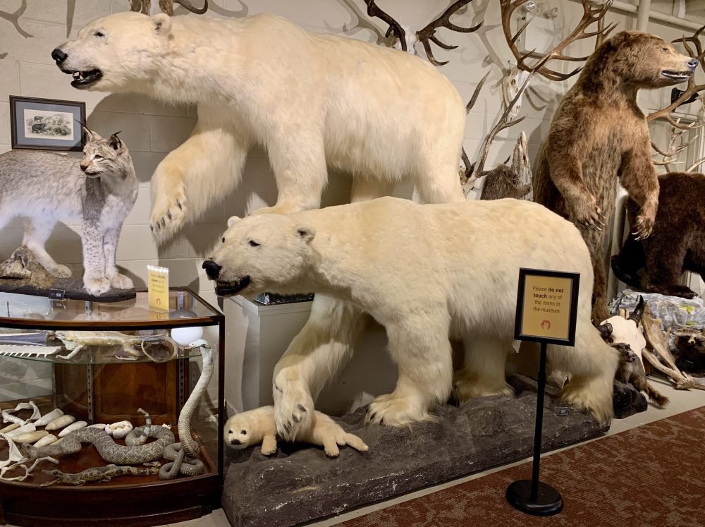 Of three main taxidermy rooms, only this one can be photographed.